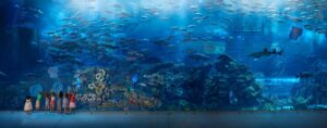 Need To Know Before Visiting Dubai Aquarium
